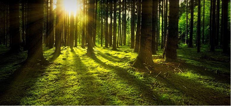 Казахстан намерен не толь сохранить, но и приумножить свои лесные массивы