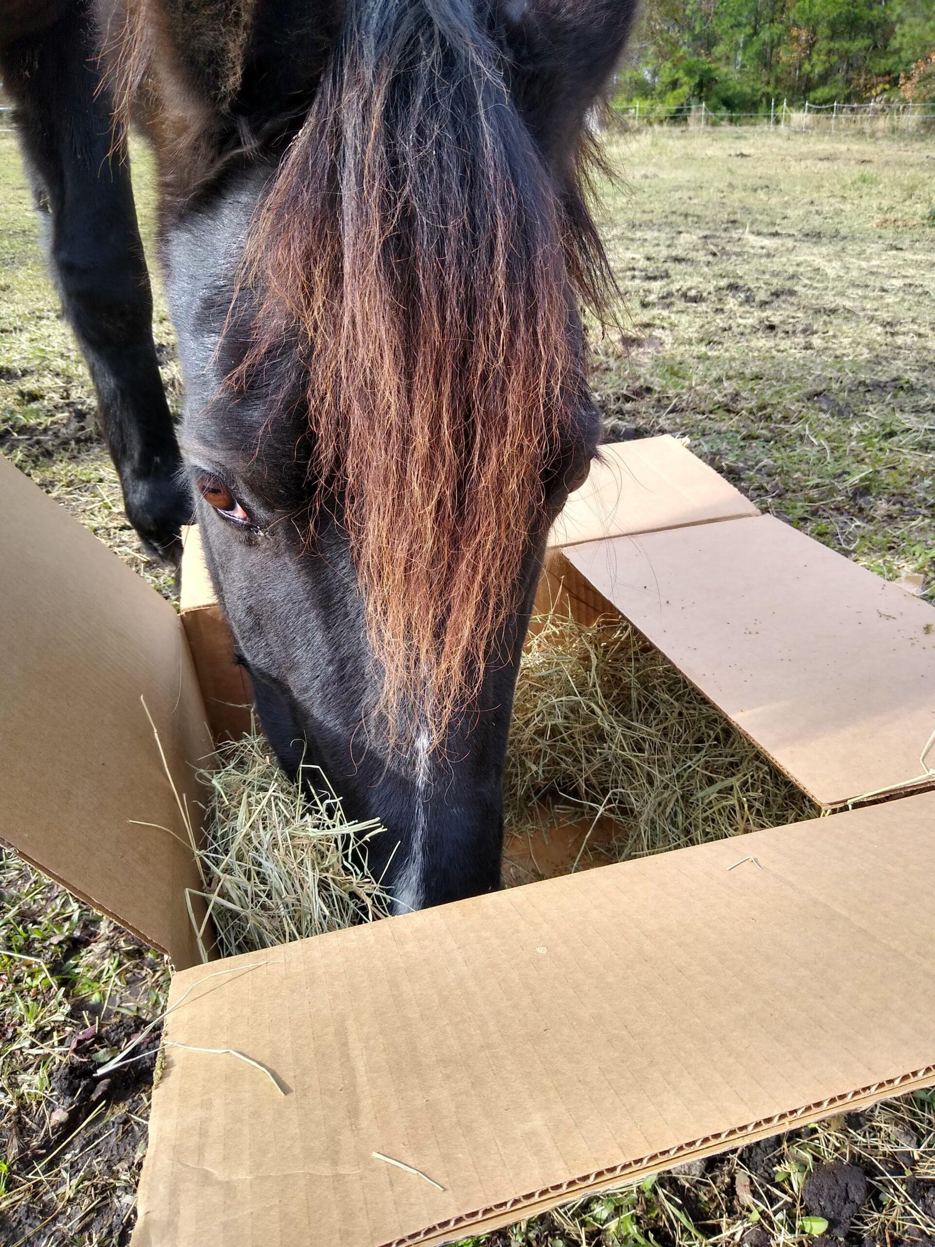 Чтобы лошади ели не картонные коробки
