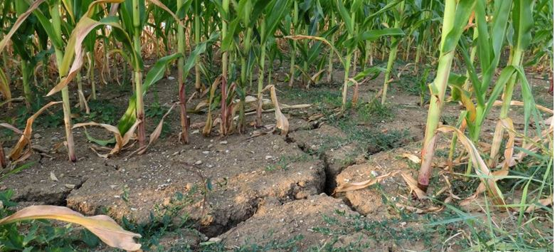 В Мангистауской области из-за засухи фермеры несут убытки